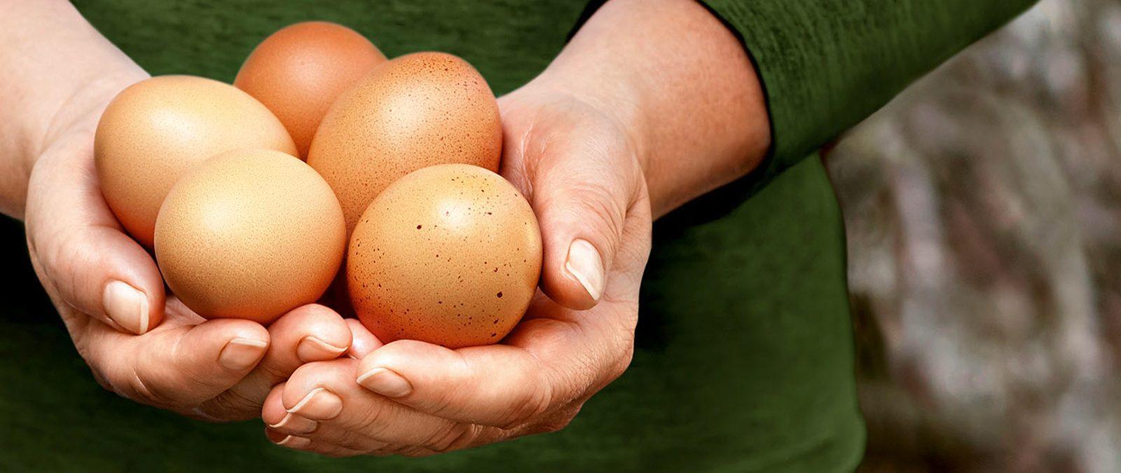 Zwei Hände halten Eier
